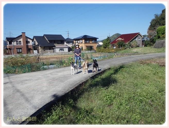 f:id:yasukazu01:20141105215818j:image