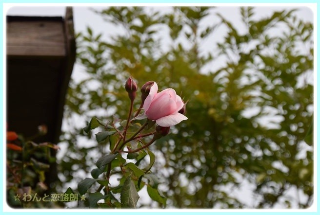 f:id:yasukazu01:20141108200835j:image