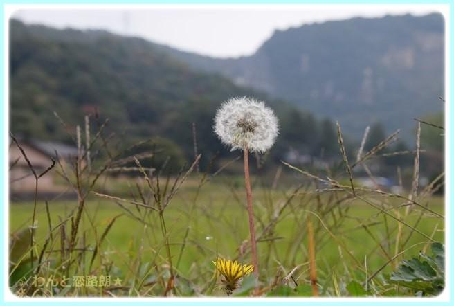 f:id:yasukazu01:20141108201125j:image