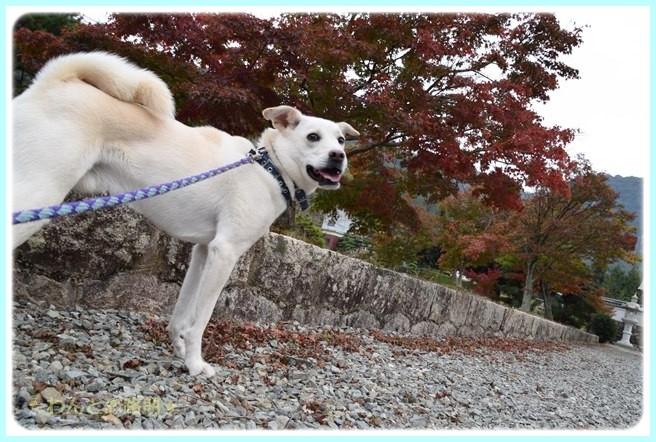 f:id:yasukazu01:20141108201336j:image