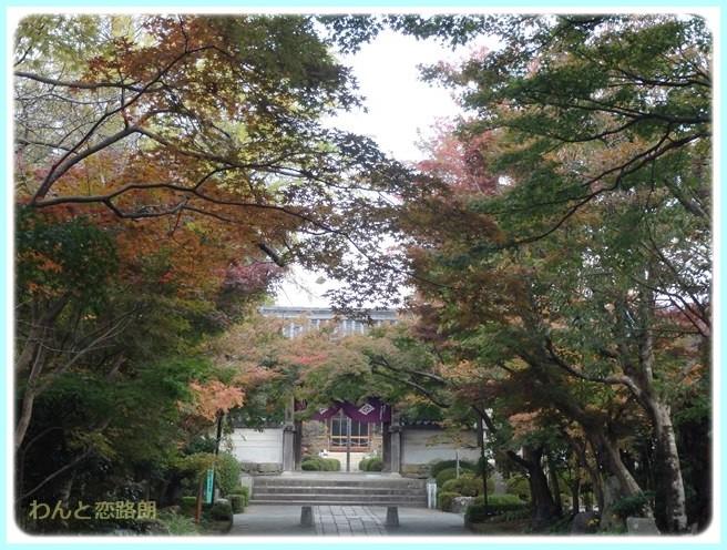 f:id:yasukazu01:20141108201816j:image