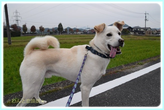 f:id:yasukazu01:20141108202331j:image