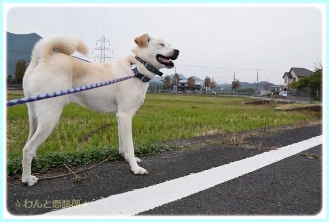 f:id:yasukazu01:20141108202522j:image
