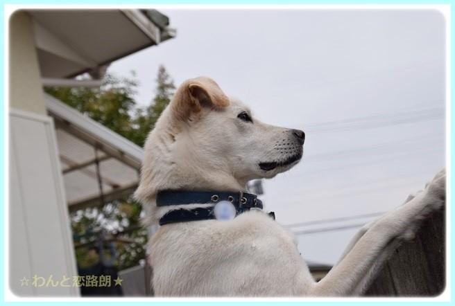 f:id:yasukazu01:20141109224121j:image
