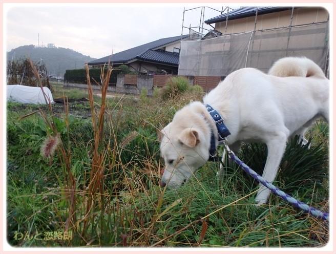 f:id:yasukazu01:20141110221848j:image
