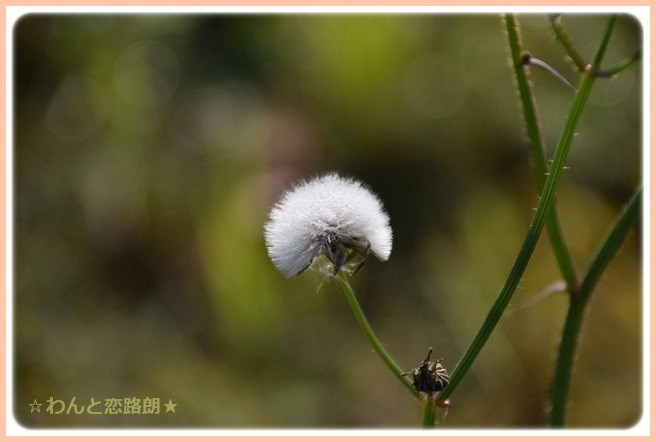 f:id:yasukazu01:20141111203535j:image