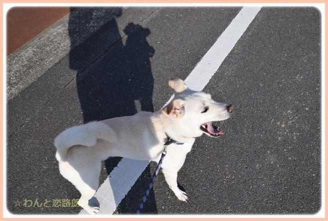 f:id:yasukazu01:20141111203806j:image