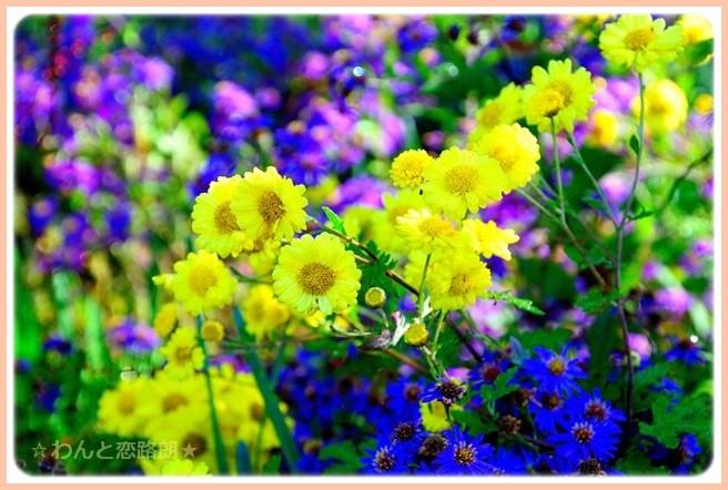 f:id:yasukazu01:20141112203710j:image
