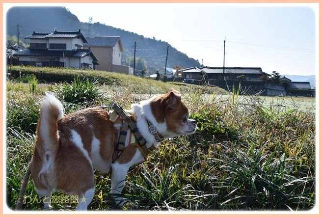 f:id:yasukazu01:20141112204835j:image