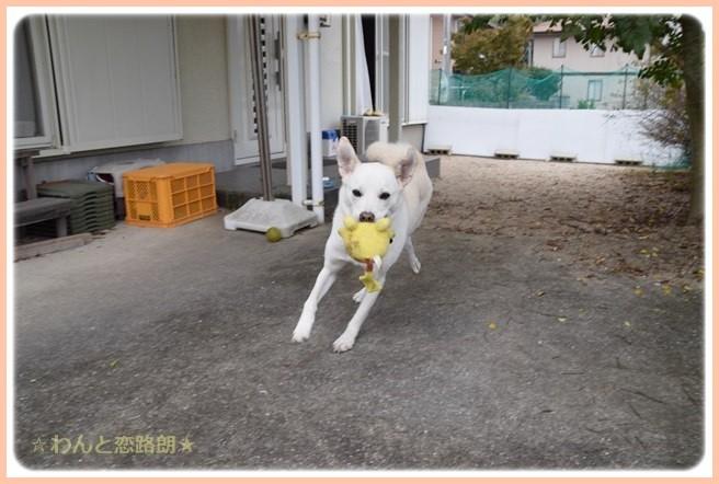 f:id:yasukazu01:20141113215916j:image