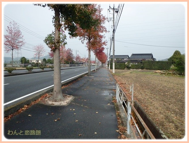 f:id:yasukazu01:20141113220456j:image