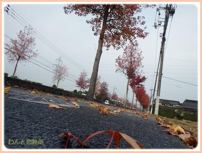 f:id:yasukazu01:20141113220648j:image