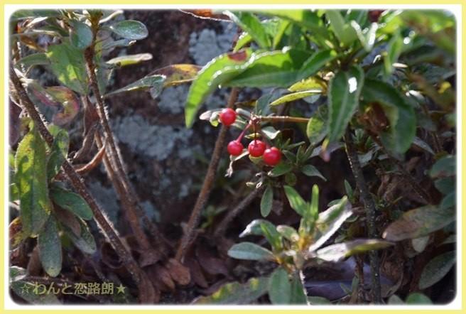 f:id:yasukazu01:20141115214336j:image
