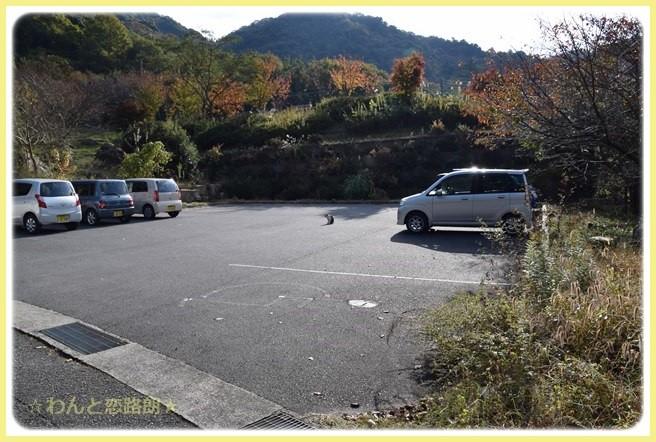 f:id:yasukazu01:20141115215000j:image