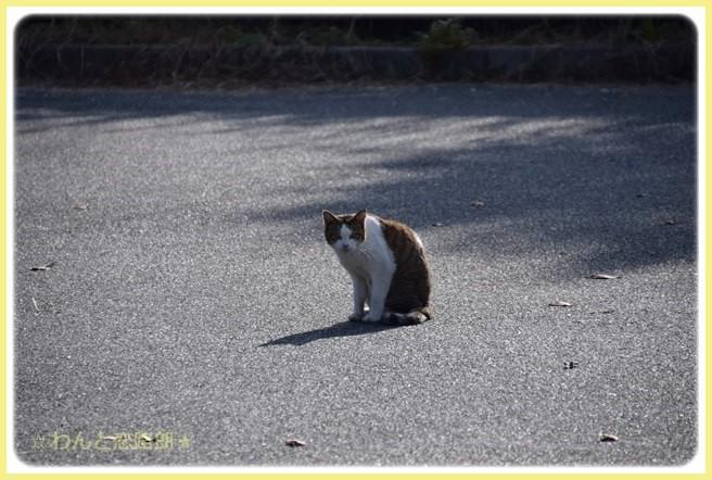f:id:yasukazu01:20141115215031j:image