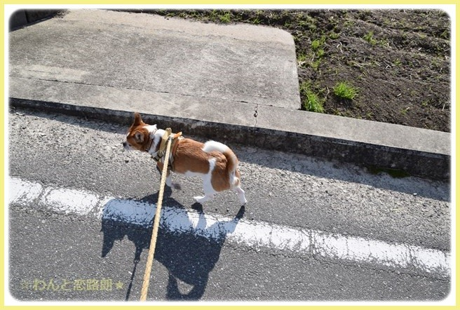 f:id:yasukazu01:20141116211829j:image