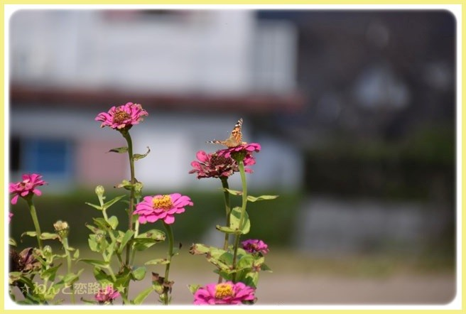 f:id:yasukazu01:20141116213149j:image