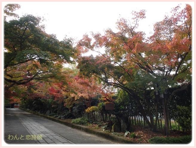 f:id:yasukazu01:20141120203302j:image