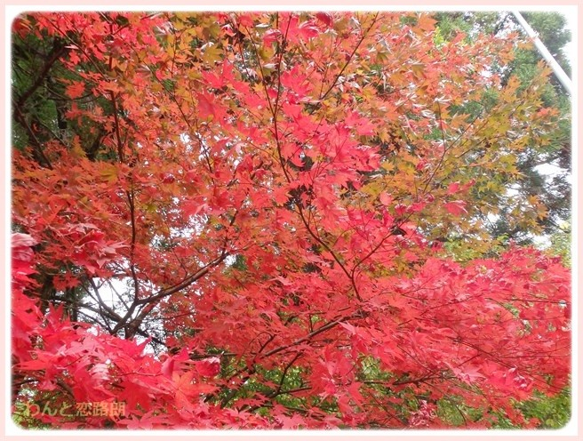 f:id:yasukazu01:20141120203432j:image