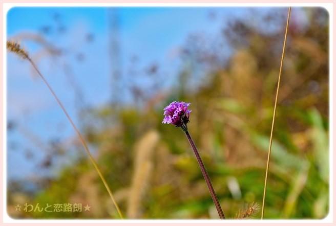 f:id:yasukazu01:20141121222027j:image