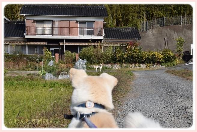 f:id:yasukazu01:20141121222625j:image
