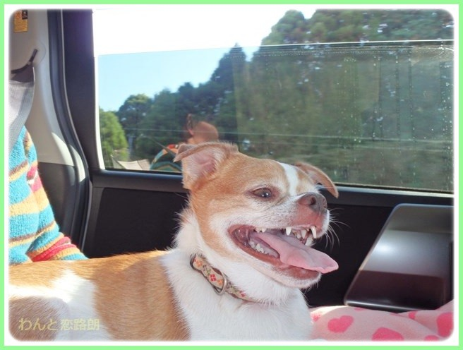 f:id:yasukazu01:20141124214840j:image