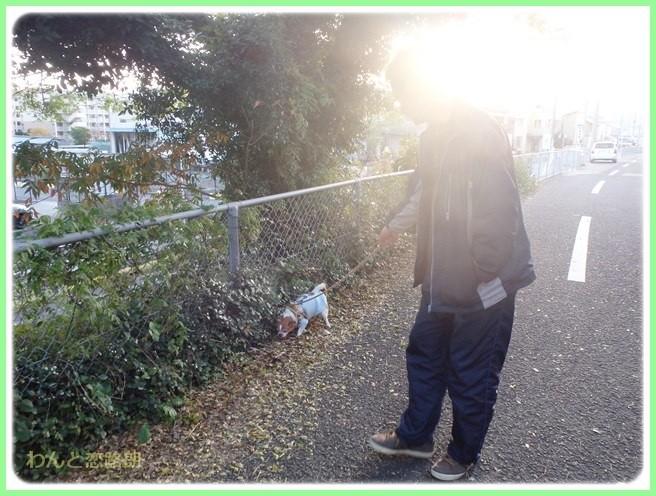 f:id:yasukazu01:20141125210115j:image