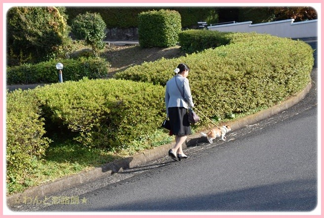f:id:yasukazu01:20141127222651j:image