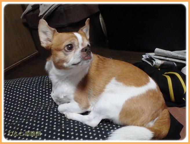 f:id:yasukazu01:20141222210029j:image