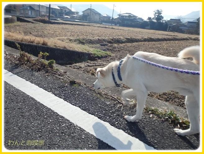 f:id:yasukazu01:20150105195628j:image