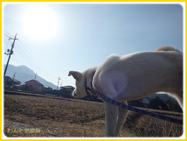f:id:yasukazu01:20150105195718j:image