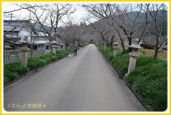 f:id:yasukazu01:20150108230425j:image