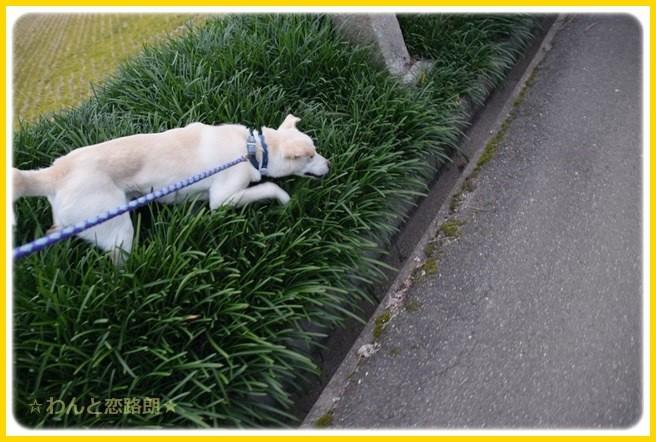f:id:yasukazu01:20150108230455j:image