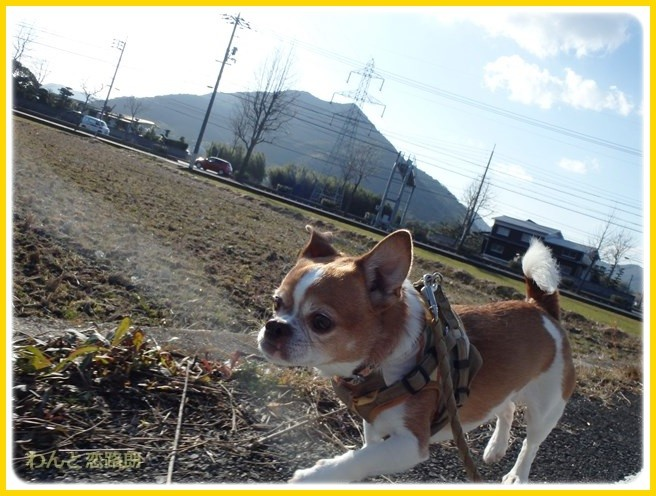 f:id:yasukazu01:20150109211645j:image