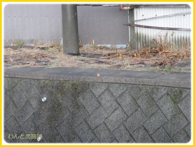 f:id:yasukazu01:20150111204337j:image