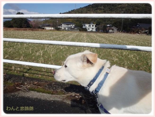 f:id:yasukazu01:20150112201439j:image