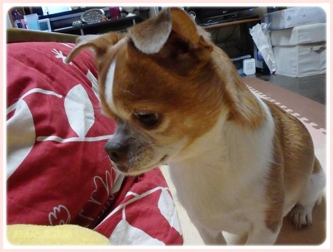 f:id:yasukazu01:20150113222632j:image