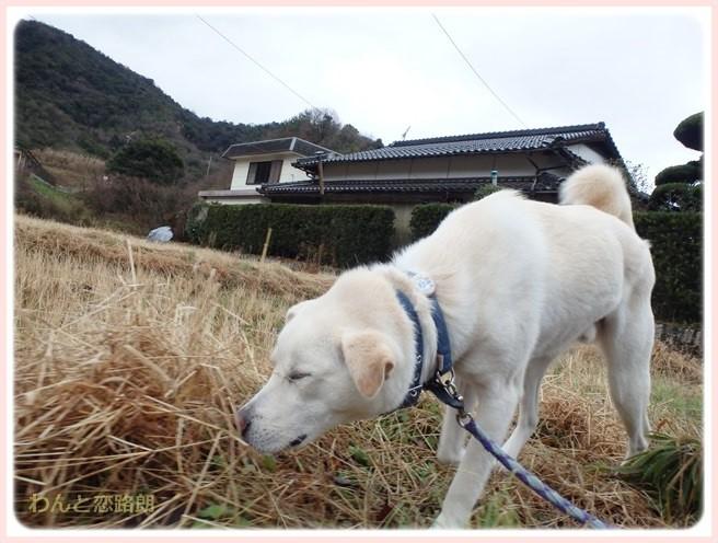 f:id:yasukazu01:20150115210720j:image