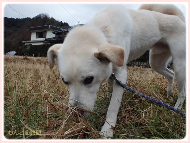 f:id:yasukazu01:20150115210856j:image