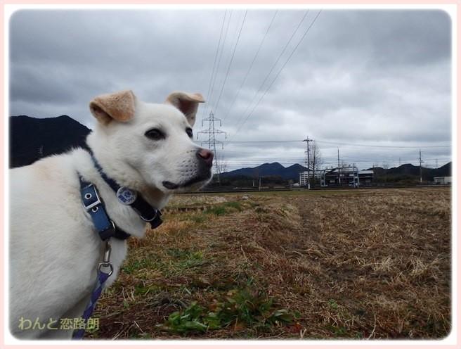 f:id:yasukazu01:20150115211528j:image