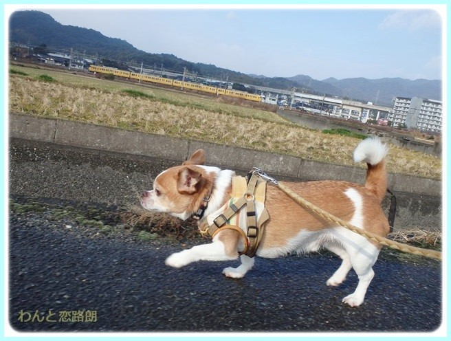 f:id:yasukazu01:20150117211655j:image