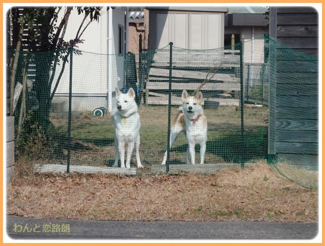 f:id:yasukazu01:20150120205352j:image