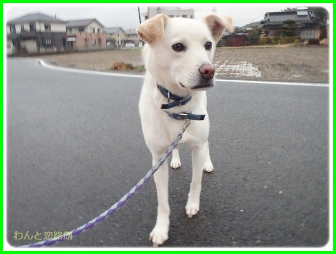 f:id:yasukazu01:20150126203256j:image