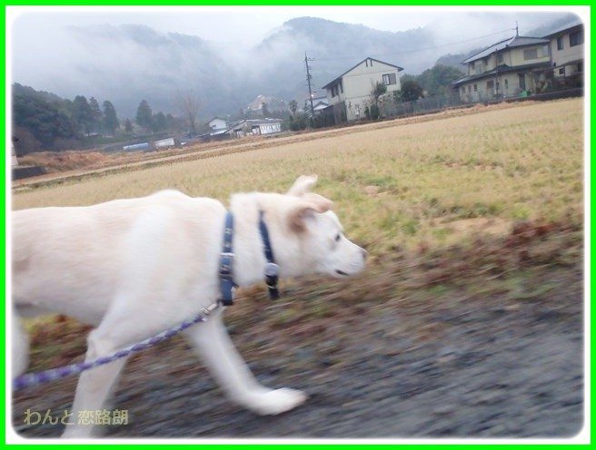 f:id:yasukazu01:20150126203351j:image