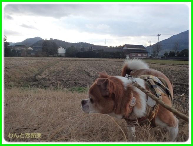 f:id:yasukazu01:20150129214043j:image