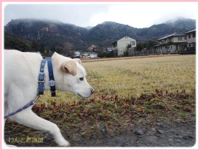f:id:yasukazu01:20150131221224j:image