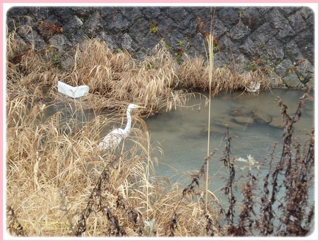 f:id:yasukazu01:20150131221555j:image