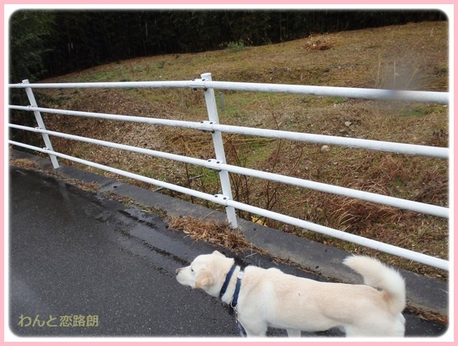 f:id:yasukazu01:20150131222226j:image