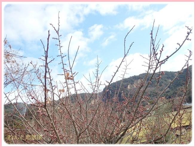 f:id:yasukazu01:20150201200202j:image