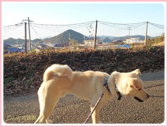 f:id:yasukazu01:20150201202016j:image